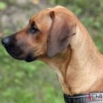 Dexter's profile