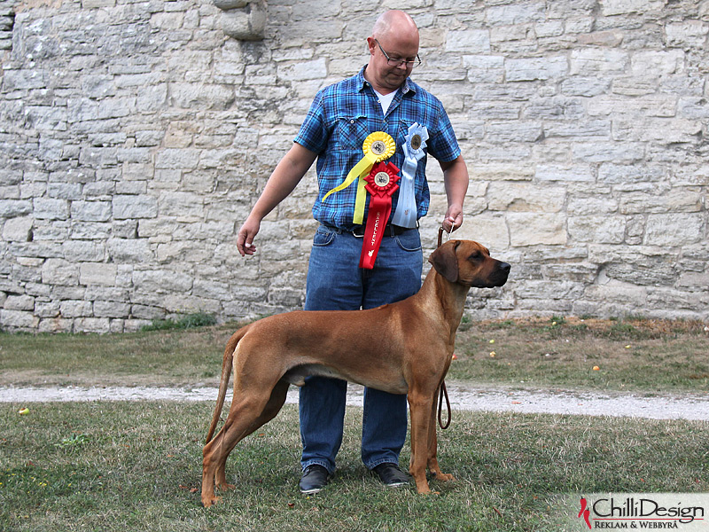 "SE JV-12 Kadamo Rob Roy ""Dexter"" and Tomas in Visby International Dog Show"
