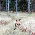 Ebba and Dexter running in the forrest