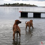 Dexter and Ebba in the water