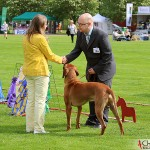 """Tomas, SE JV-12 Kadamo Rob Roy """"Dexter"""" and the judge in best male"""