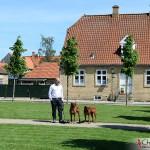 Tomas, Argos & Koya in Christiansfeld, Denmark