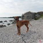 Dexter at The limestones