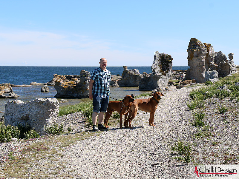 Dexter, Argos and Dexter at Asunden