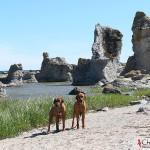 Argos & Dexter at the limestones in Asunden