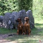 Dexter & Argos at Gnisvärd stone ship grave