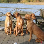Greta, Argos, Dexter & Olga