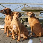 Argos, Dexter, Greta & Olga