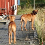 Greta & Dexter