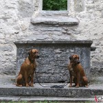 Dexter & Argos at the Ehlinghem churchruin