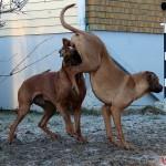 Dexter & Zoya