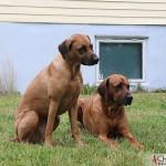 Zoya & Dexter