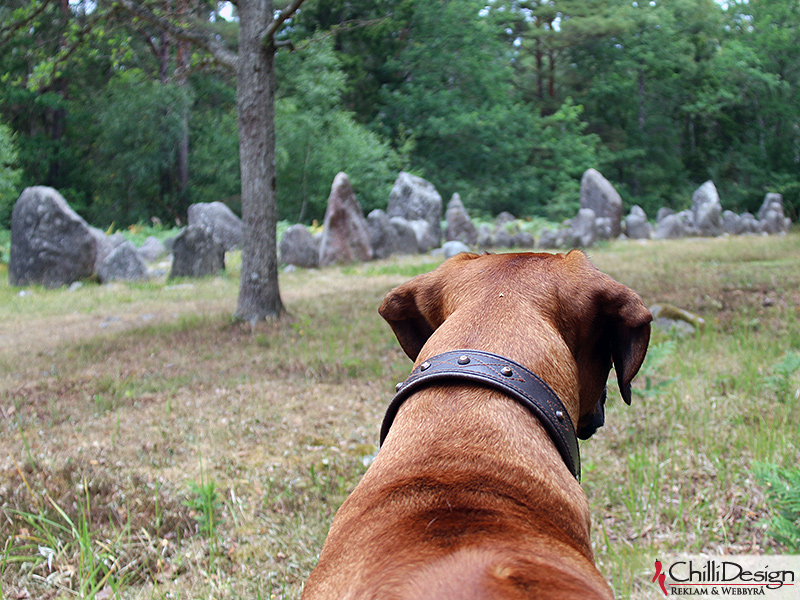 Dexter looking at the boat-shaped graves in Rannarve