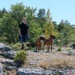 Tomas, Argos & Dexter at Södra Hällarna nature reserve, outside of Visby
