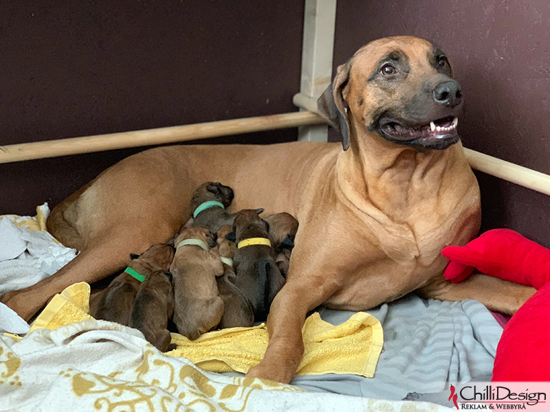 Zoya and the litter