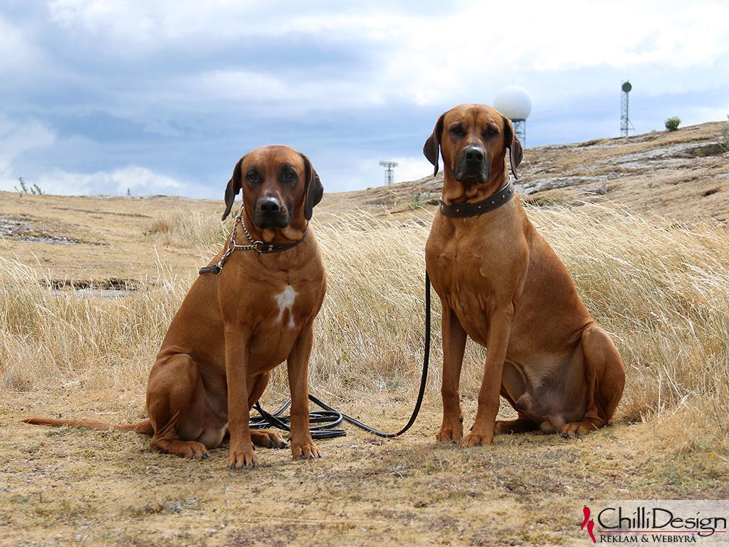 Argos & Dexter at Hoburgen