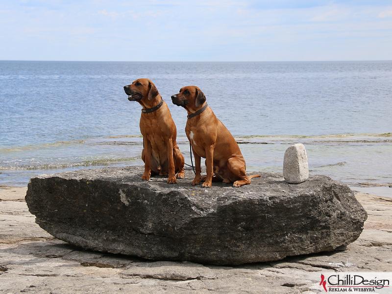 Dexter & Argos at Ryssnäs, Fårö