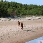 Dexter & Argos running at Norsta Auren, Fårö