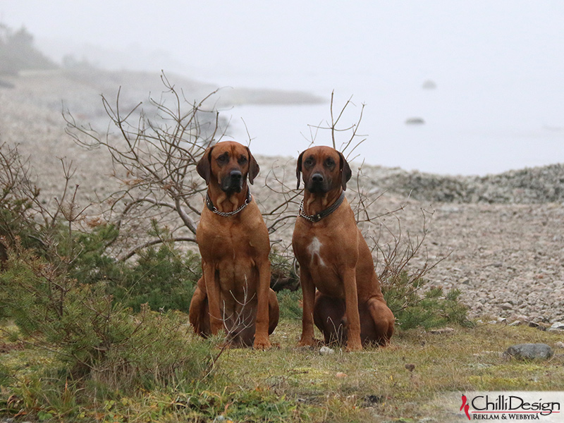 Dexter & Argos at Ekstakusten