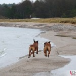 Dexter & Argos running at Ihreviken