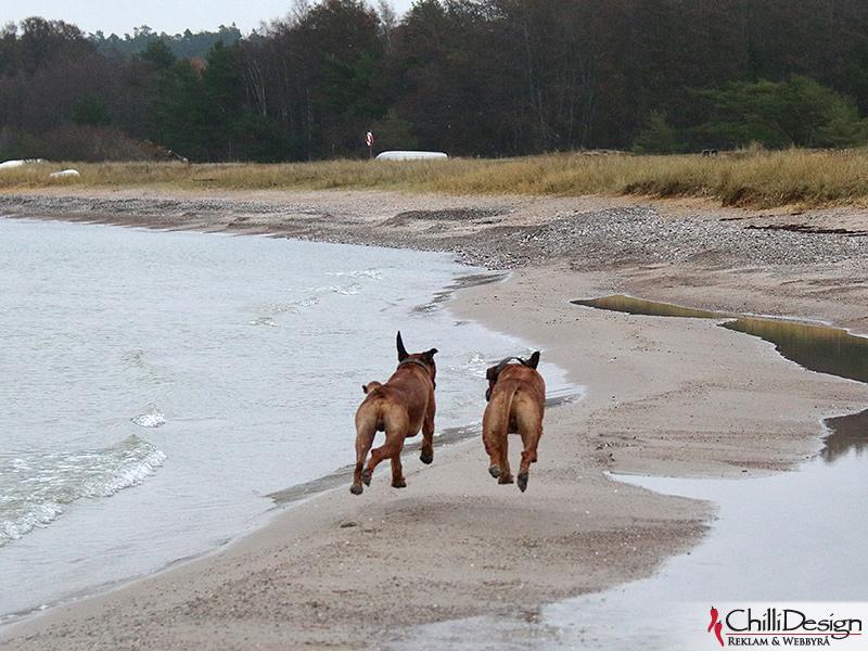 Dexter & Argos running at Ihreviken