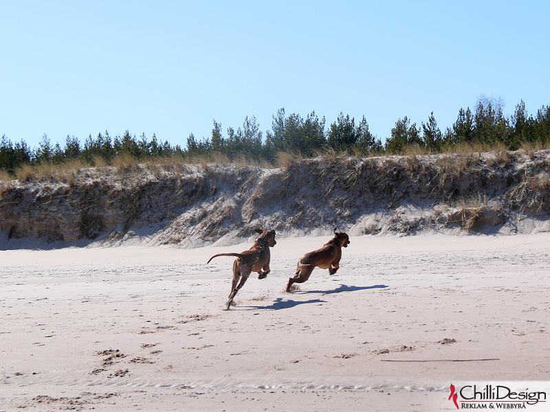 Argos & Dexter at Norsta Auren