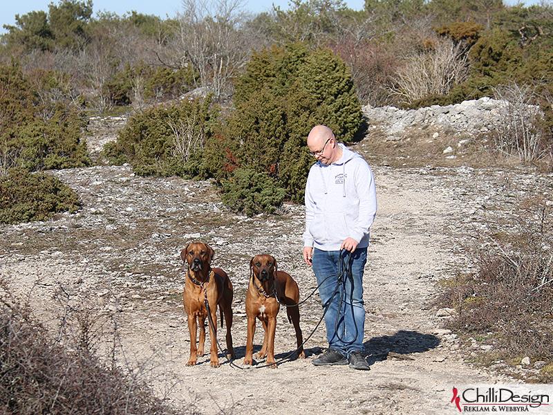 Dexter, Argos & Tomas