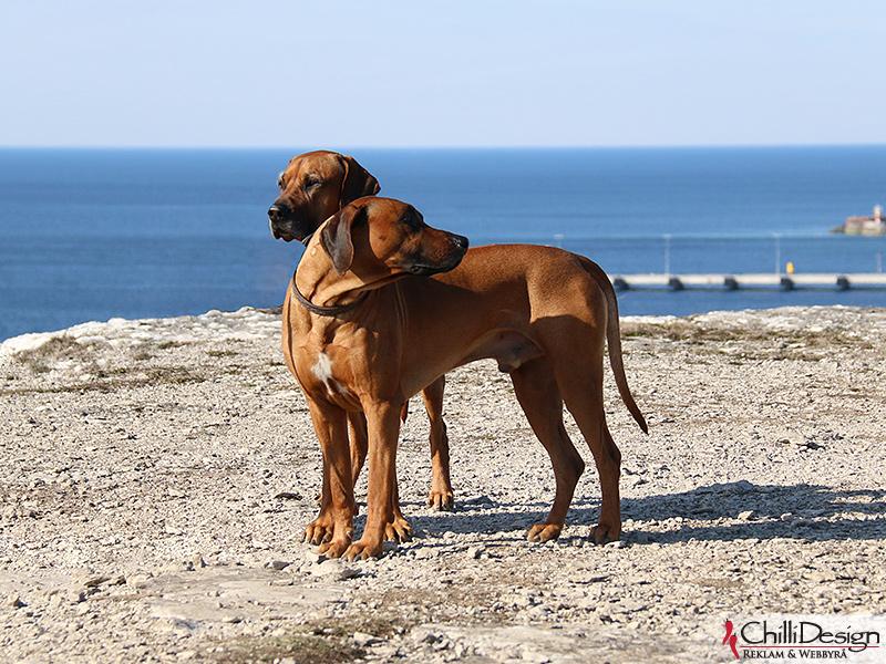 Dexter & Argos at Södra hällarna