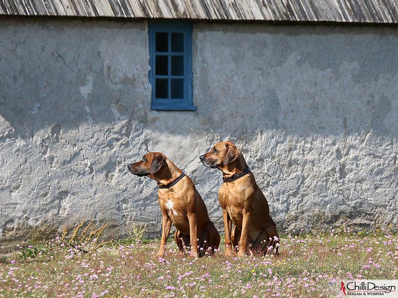 Argos & Dexter in Kovik