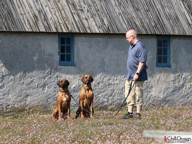 Argos, Dexter & Tomas in Kovik