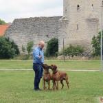 Tomas, Argos & Dexter in Visby