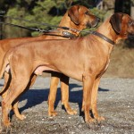 "Kadamo Rob Roy ""Dexter"" & Kadamo Nothing But Gold ""Argos"""