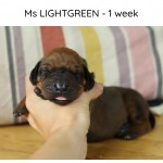 Ms Lightgreen - Kadamo Stanza