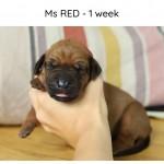 Ms Red - Kadamo Micra
